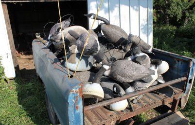 goose decoys, canada goose decoys, geese decoys